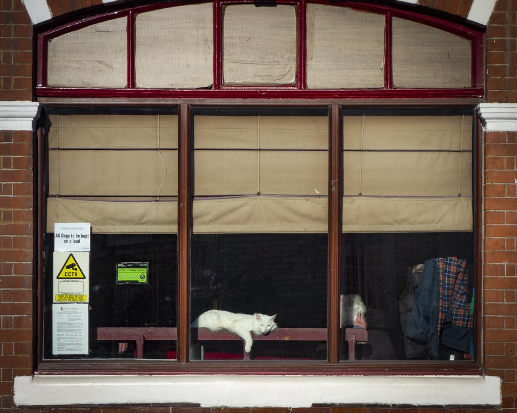 Pub Cat, Kings Head, Highbury