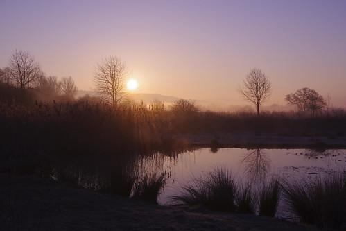 mist water light trees sunrise silhouette shropshire frosty sundorne