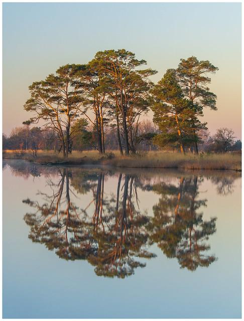 Reflections at Dwingelderveld