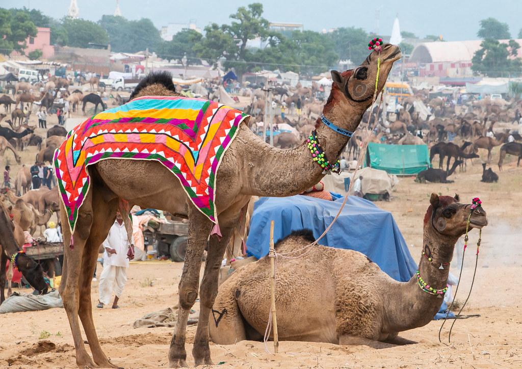 Pushkar 402 - Camel Fair - C
