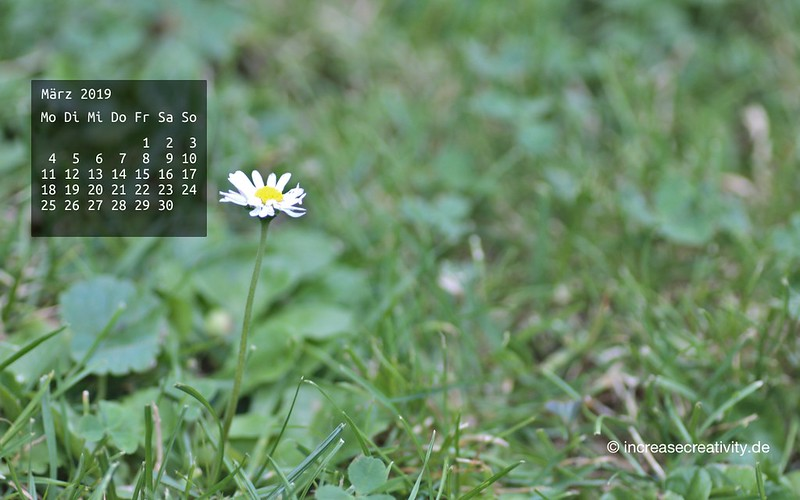 032019-gaensebluemchen-wiese-wallpaperliebe-increasecreativity