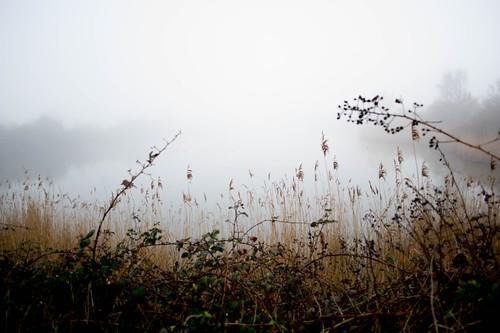 24_03_2019 Natur Nebel (24) | by Katzenpfote