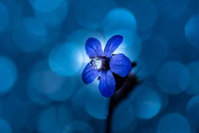 Blue tear of a beautiful soul.