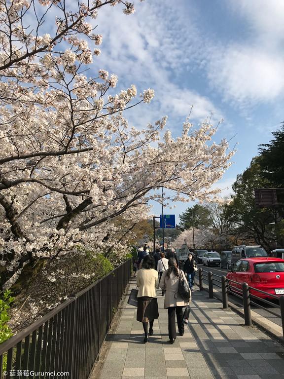 打工度假-京都生活-賞花、野餐-028