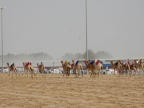 Al Marmoom Camel Racing Track - 9
