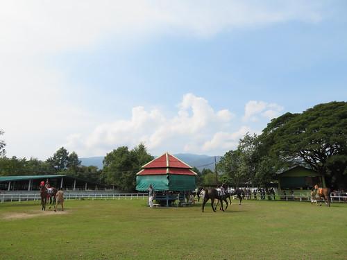 チェンマイ競馬場のパドック風景