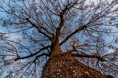 L'arbre en contre-plongée