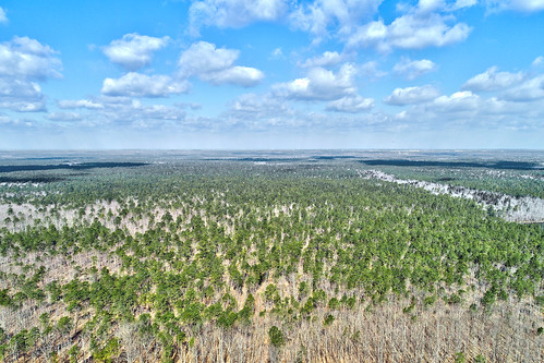 brendan byrne state forest new jersey pine barrens aerial view drone