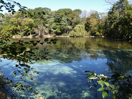 brookfieldil brookfieldzoo nature flora plants green zoo water pond landscape trees leaves foliage