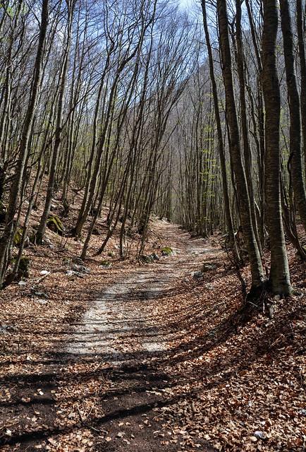 All'inizio di aprile, sull'Appennino, nel bosco ancora spoglio
