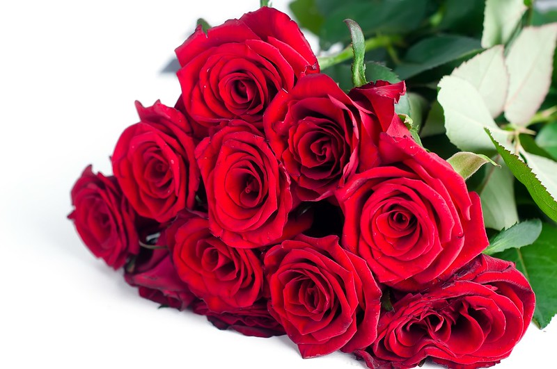 Обои цветы, розы, букет, красные, red, flowers, beautiful, romantic, roses картинки на рабочий стол, раздел цветы - скачать