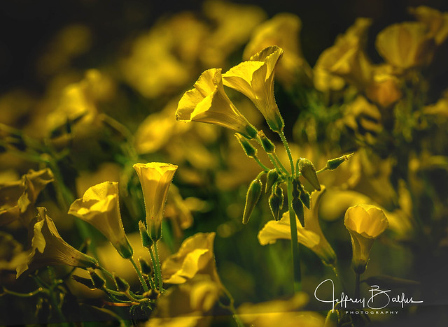 Explosion of Yellow