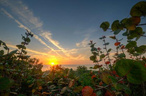 emersonpoint palmettoflorida sunset water green florida palmetto sun gulf gulfofmexico