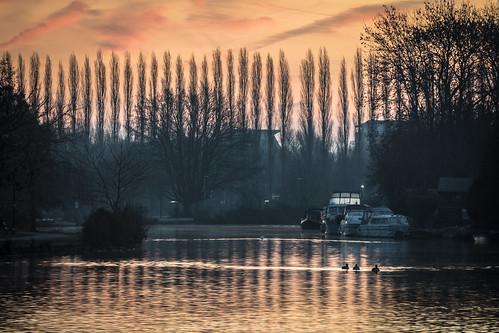 berkshire birds caversham christchurch dawn meadows morning reading reflections river sunrise thames trees winter