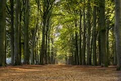 woods terapel lane