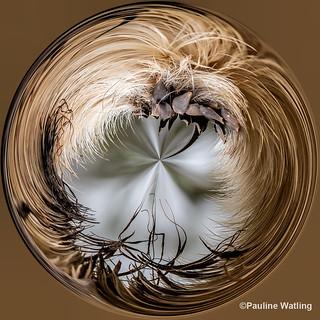 Photoshop Dead Head Flower