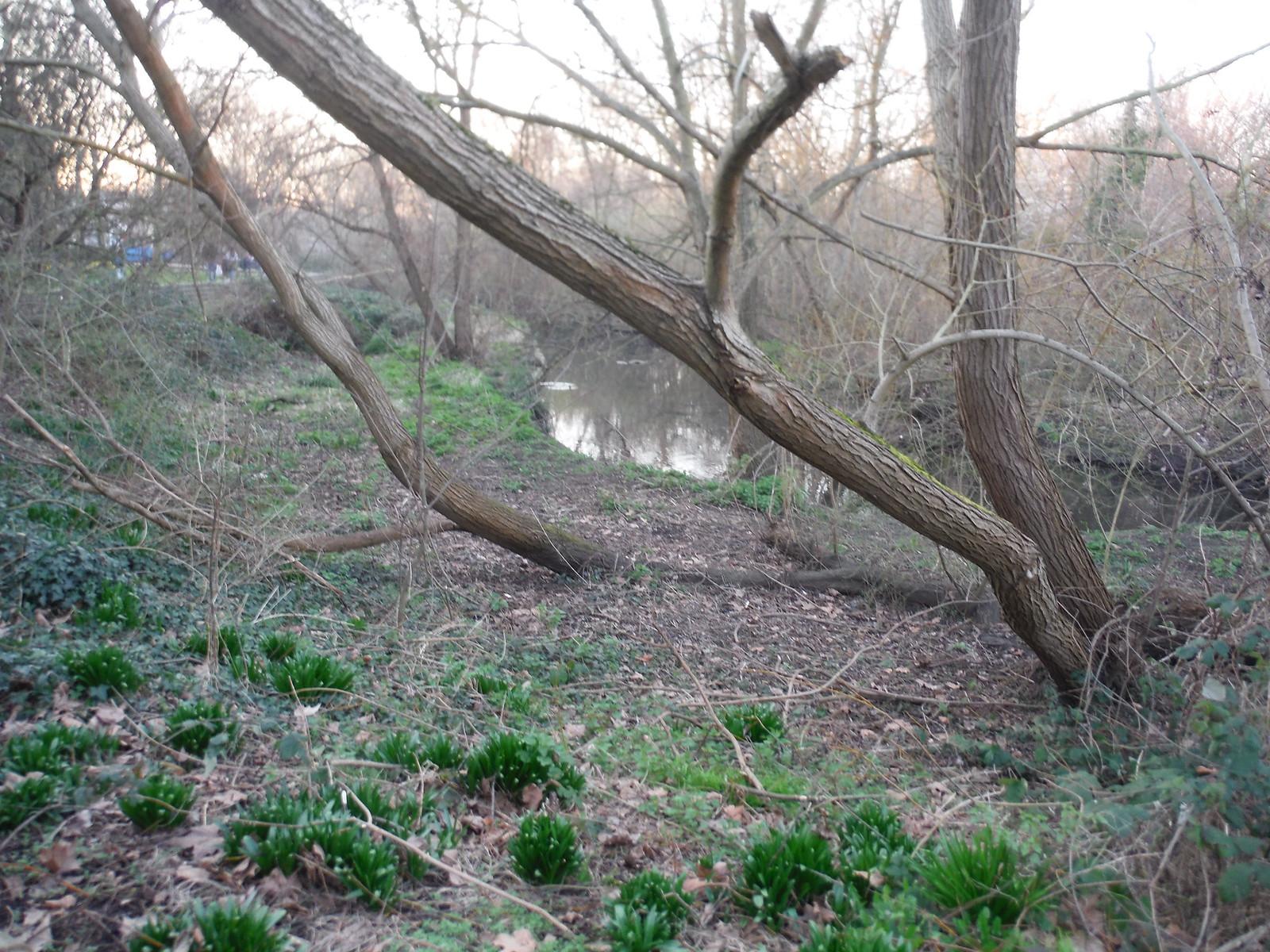 Ravensbourne in Brookmill Park SWC Short Walk 36 - Waterlink Way (Lower Sydenham to Greenwich)
