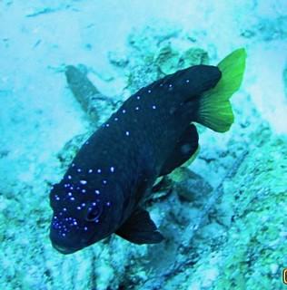 Aruba scuba shots videos 678 - Version 2