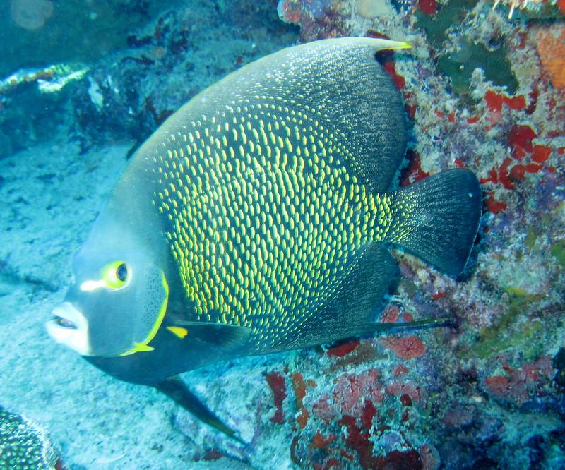 Aruba scuba shots videos 184