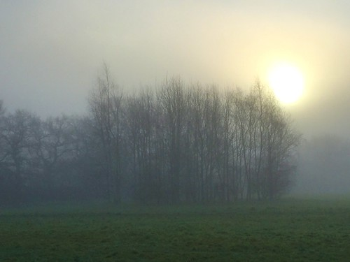 misty morning fog sun mist sunrise nature landscape trees johndalkin heavensgatejohn 10faves 25faves