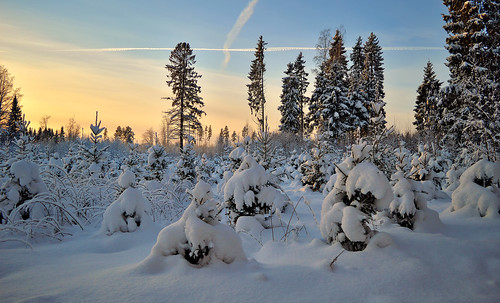 Winter wonderland. Sunny day... but it's -21C. Nice and warm :-))) Who wants to walk with me? ;-)) Winter 2019, Finland. | by L.Lahtinen (nature photography)