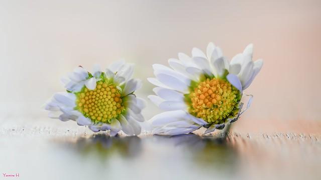 Flowers - 6531