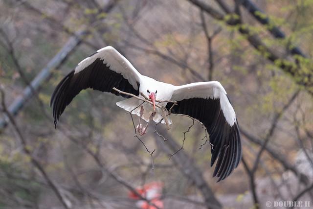 Tennoji Zoo 2019.3.30 (22)