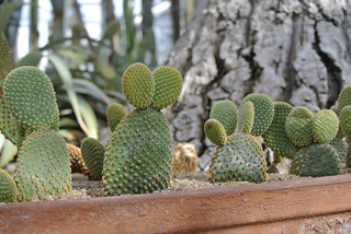 :: Cacti | by .Ines