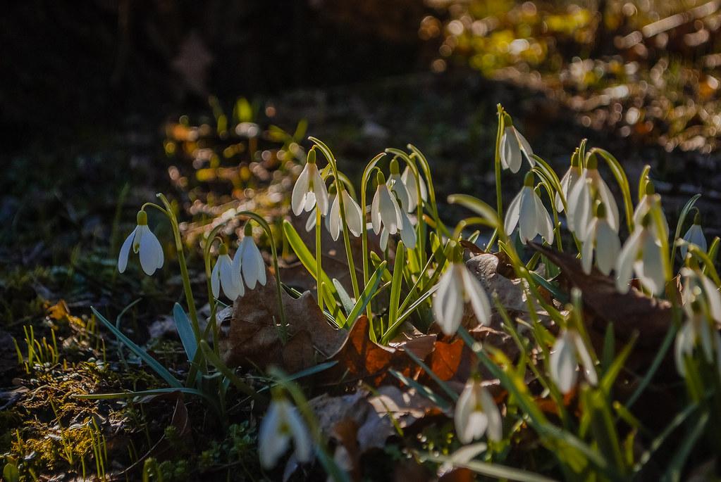 Pretty spring ! 09:14:00 DSC_2450