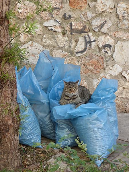 chat sur sac bleu