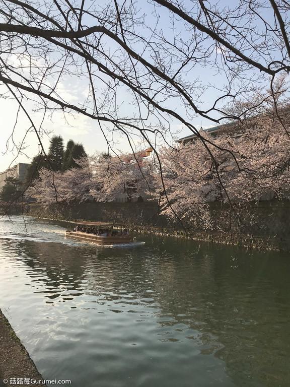 打工度假-京都生活-賞花、野餐-084