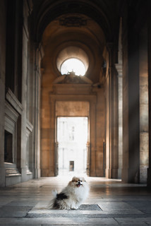 Pomeranian at Louvre Museum | by TheLittlePaws