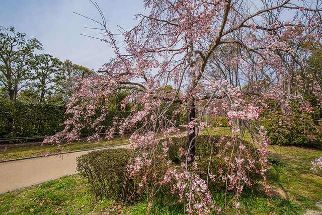 The Japanese Garden in Daisen Park, Sakai City - Ōsaka.