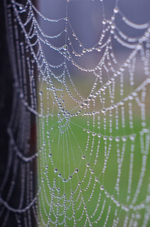 dewdrops & web... | by pepperberryfarm