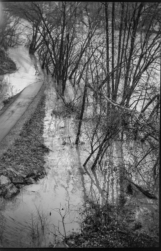 looking down, urban park, flooded II, French Broad River, Ashevile, North Carolina, Goerz Box Tengor, Kodak TriX 400, Ilford Ilfosol 3 developer,  12.28.18