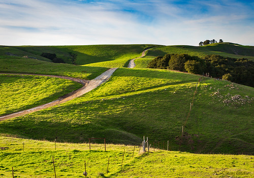 irishhills prefumocanyonroad greenhills california countryroad dirtroad sanluisobispo afternoon afternoonlight light landscape mimiditchie mimiditchiephotography getty gettyimages