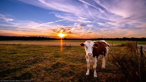 aquatower berdorf lu animal animals cow dusk europe evening hdr highdynamicrange landscape landscapes luxembourg mammals nightfall sunset sundown twilight wildlife mullerthal hdri