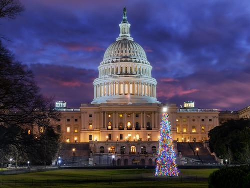 unitedstatescapitol capitol dome uscapitol christmastree bluehour sunrise christmas rotunda washington dc washingtondc dawn architecture cityscape city