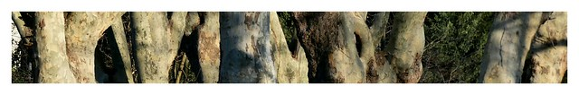 Baum Allee