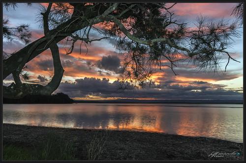 amandarainphotography australia australianphotography australianlandscape australiassouthcoast autumn autumn2019 shoalhaven seascape sea seaside southcoast seascapephotography stgeorgesbasin sky sunset sanctuarypoint sunsetphotography trees southernskies ocean photography photoborder peaceful prettybeach prettysunset colourfullandscape colourfulsunset seaweed beautifulsunset beautifulbeach beautifulscenery coastallandscape coastal coastline coast calmocean cloudreflections skyphotography skyscape bigsky itsallgoodamanda jervisbayphotography jervisbay newsouthwales australiaseastcoast