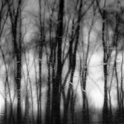 d5000 dof nikon ryersonwoodsforestpreserve abstract blackwhite blackandwhite blur branches bw depthoffield dreamlike dreamy forest landscape monochrome natural noahbw reflection square treetrunk trees water winter woods