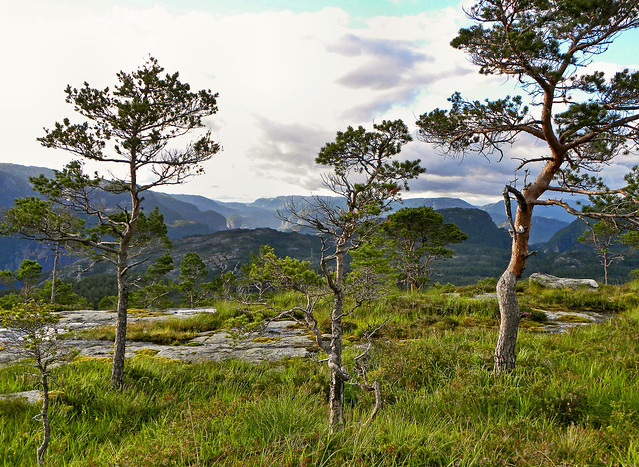 Typical scenery on the basement rock plain high above Osvatnet