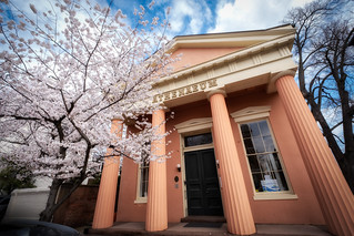 Blossoms over the Athenaeum