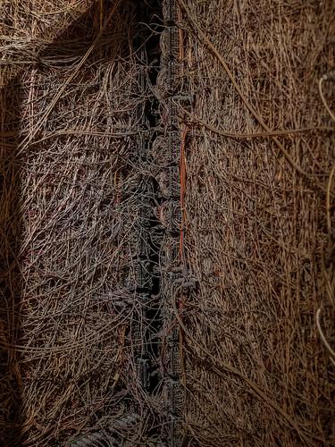 entangled | by kasa51