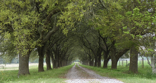 Acadiana Backroads | by Keyfer