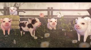 This Little Piggy. | by Brandi Monroe