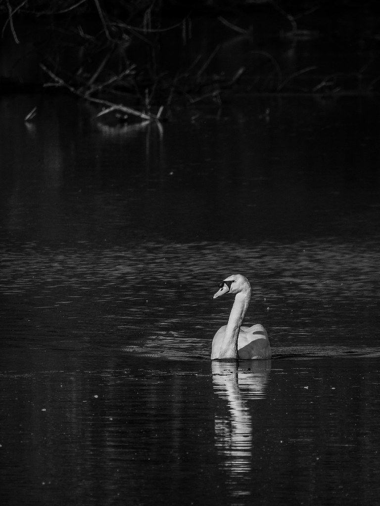 Un soir sur l'étang... 32651324667_9b479cc07f_b