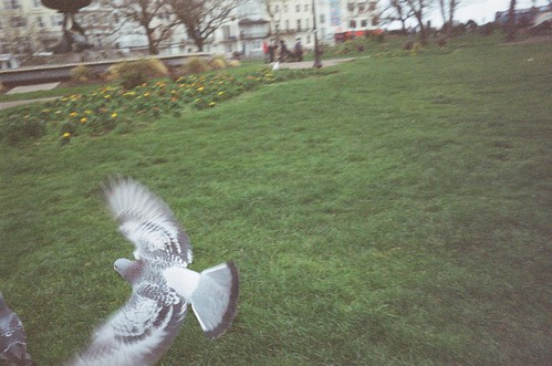 Pigeon | by Jamie Kitson
