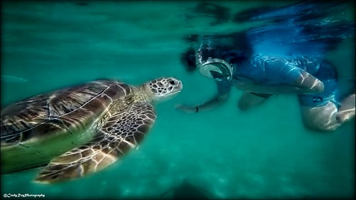 🐢Friendship🐢 | by Cindy Roy Photography