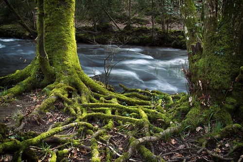 Mossy Roots and the River | by Christian Hacker